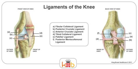 diagram of ligaments in the knee king brand knee images