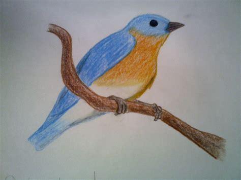 bird art drawing birds bird drawing 2 by shel shock on