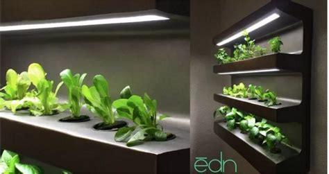 growing vegetables indoors twenty    time