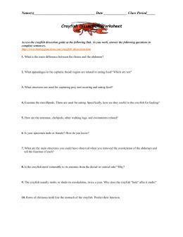 Crayfish Dissection Worksheet by Studylib Net Essys Homework Help Flashcards Research