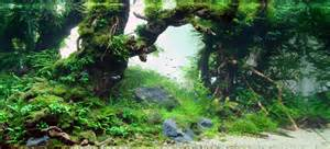Aquascape Forest by Background Poster Pics Background Layouts For Aquarium