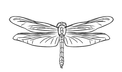 Free Dragonfly Coloring Page 20 Dragonfly Colouring Pages