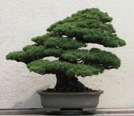 bonsai trees in japanese prints small is beautiful