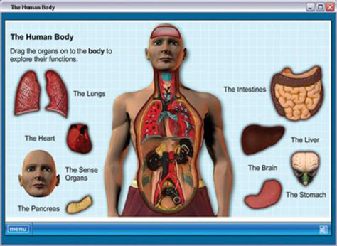 weebly templates human body systems home