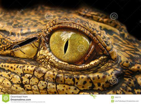 dragons eye stock  image