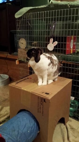 Must For The Week The House Bunny by Bunny Photos Rabbit Pictures