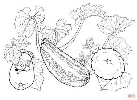 what color is squash squash coloring page free printable coloring pages