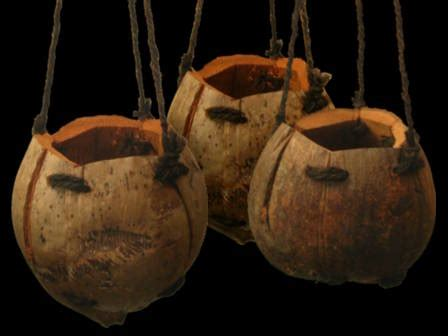 kreasi pot unik  buah kelapa  iqmal tahirs blog
