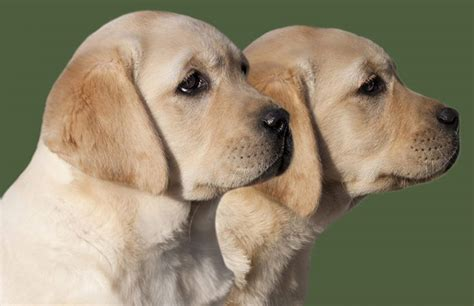 names for big dogs big names 350 awesome ideas for large puppy naming