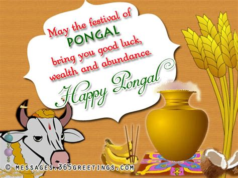 may the festival of pongal bring you good luck wealth and abundance happy pongal