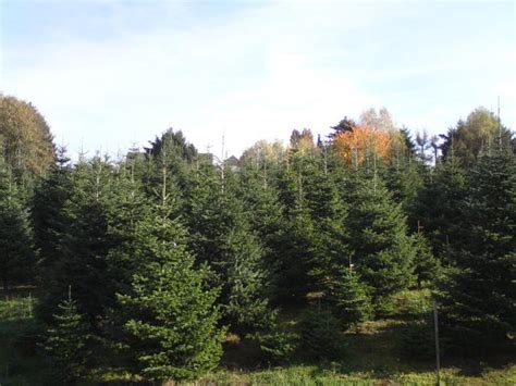best 28 weihnachtsbaum selber schlagen bonn