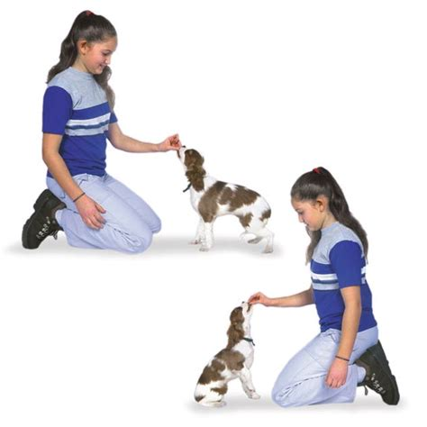 how to your puppy to sit teach your puppy these 5 basic commands american kennel club