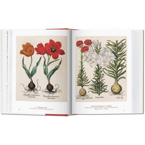 a garden eden masterpieces 9783836559423 a garden eden masterpieces of botanical illustration iep