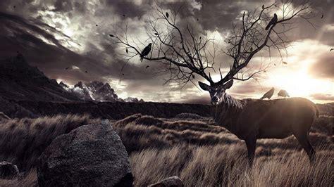 imagenes asombrosas tumblr free deer wallpapers wallpaper cave