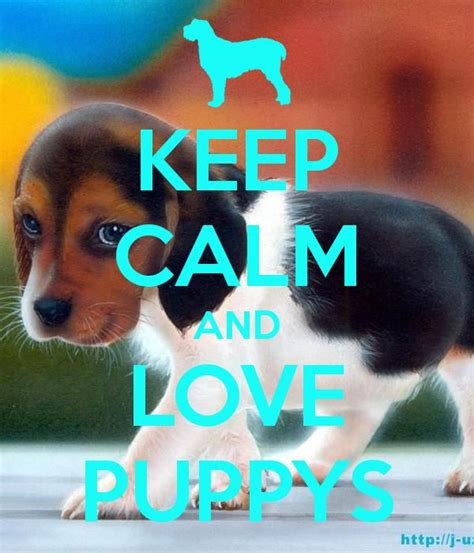 keep calm and puppies 17 best images about keep calm and puppies on pets puppys and always