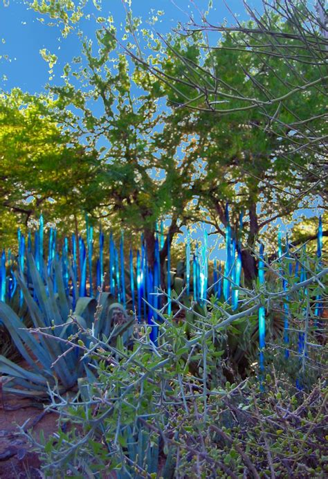 chihuly desert botanical garden chihuly glass sculpture exhibit at the desert botanical
