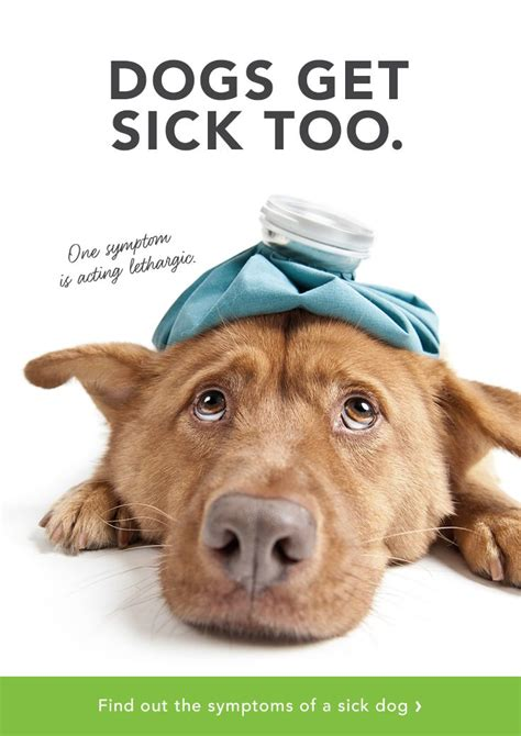 do dogs catch colds 17 best images about pet on cats doggies and spaniels