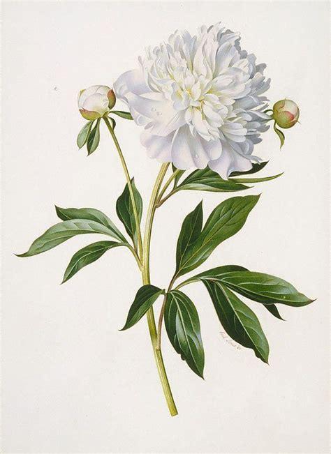 25 best ideas about botanical prints on pinterest
