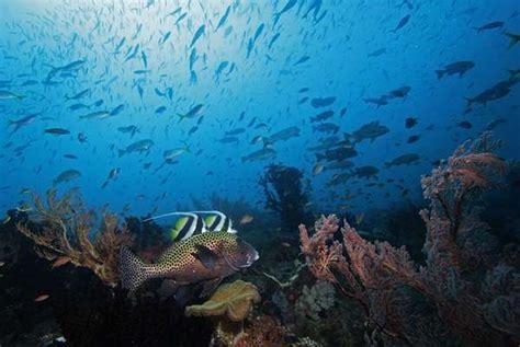 wallpaper keindahan alam bawah laut indonesia timur masih juaranya keindahan alam bawah laut