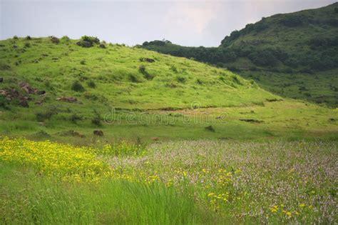 immagini paesaggi fioriti paesaggi e prati fioriti fotografia stock immagine di