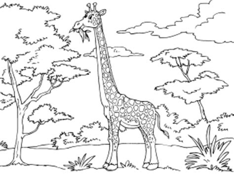 el ecosistema colouring pages dibujos de animales de la selva para colorear