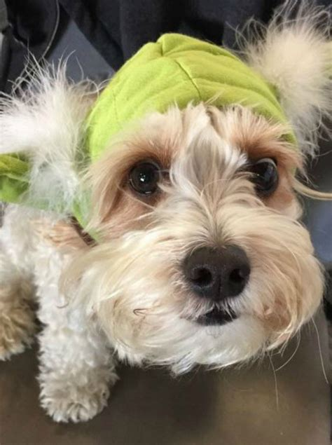 cani in cabina aereo in viaggio con il cucciolo in aereo i cani potranno stare