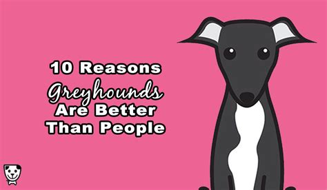 10 Reasons Shoes Are Better Than by 10 Reasons Why Greyhounds Are Better Than