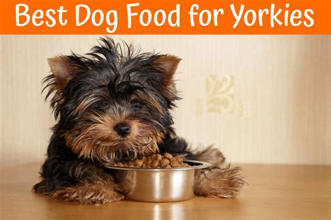 best yorkie food best food for yorkies guide in 2017 us bones