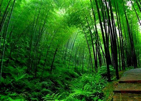 background hutan bamboo background 2027