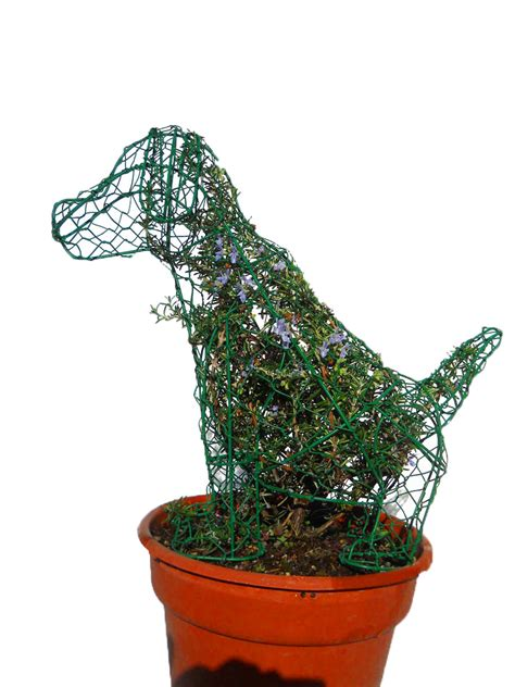 cheap topiaries wholesale animal topiaries topiary frames shapes sk