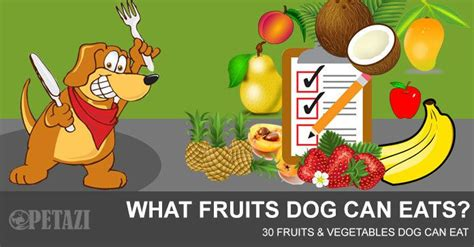 can dogs eat plums what fruits can dogs eat 30 fruits and vegetables that can eat petazi