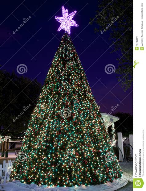 city hall s outdoor christmas tree stock image image