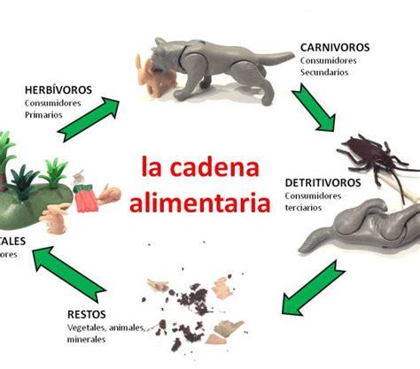 cadenas alimenticias carnivoros cadena alimenticia de animales carnivoros www imagenesmy