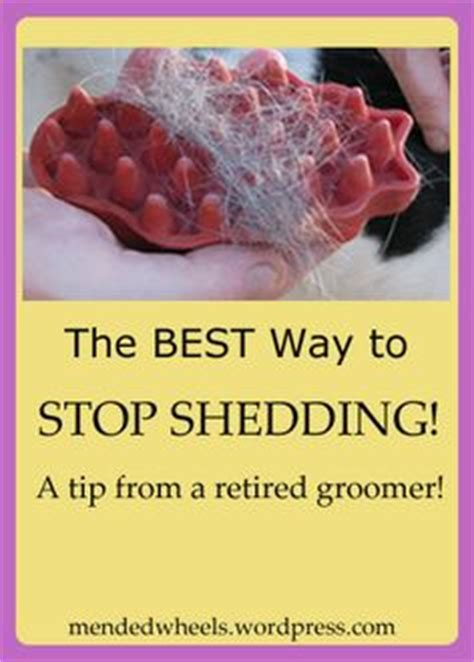How To Stop A Cat Shedding by For Dogs Medicine And Dogs On