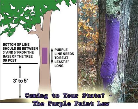 purple paint law coming to your state the purple paint law