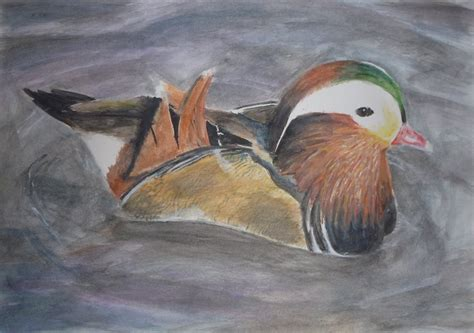 watercolor wood duck by manicmagician on deviantart watercolor mandarin duck by relativerelativity on deviantart