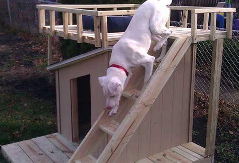 build  dog house  sun deck   home depot