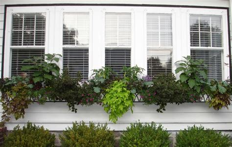 window plants window boxes with green plants windowbox
