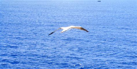 sul gabbiano gabbiano sul mare foto immagini diana foto su fotocommunity