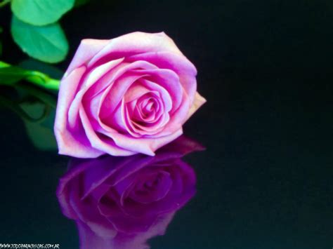 imagenes en 3d rosas fondos en color rosa taringa