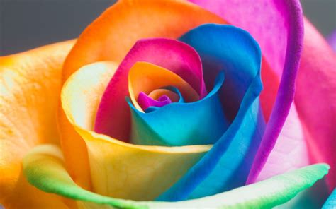 colorful wallpapers of flowers colorful flower wallpaper desktop wallpapers