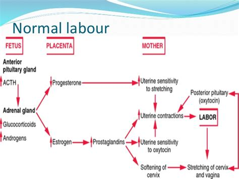 self induction of labor induction and augmentation of labour