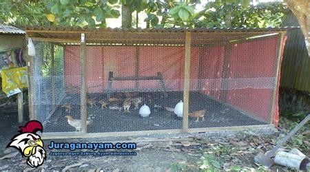 Alas Kandang Ayam Dari Plastik alas pasir untuk kandang ayam sebagai pilihan alternatif