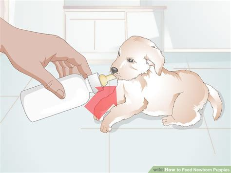 can you give puppies baby formula how to feed newborn puppies 11 steps with pictures wikihow