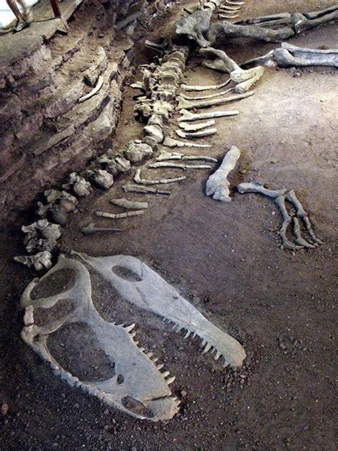 Who Find Dinosaur Bones Best 25 Dinosaur Fossils Ideas On Dinosaurs Preschool Dinosaur