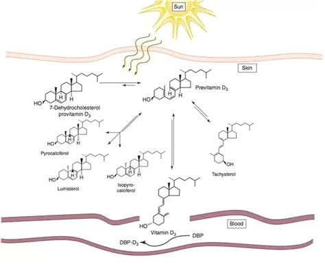Uv B L For Vitamin D by 8 Answers How To Efficiently Absorb The Vitamin D From