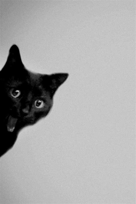 cat wallpaper we heart it black cat via tumblr on we heart it