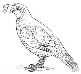 coloring pages for quail quail coloring pages az coloring pages