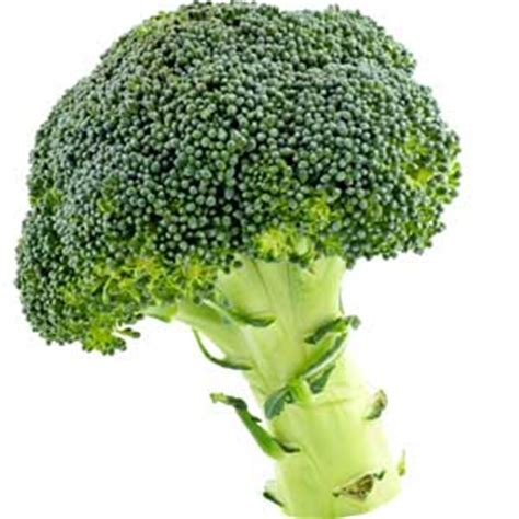 dogs broccoli can i give my broccoli can pet dogs eat broccoli or not