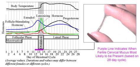 Fertilization Calendar Ovulation What Is A Menstrual Cycle Health Care 171 Qsota 187